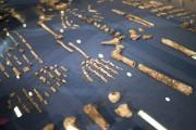 L'Homo naledi, notre lointain cousin découvert récemment en... (Photo AFP) - image 1.0