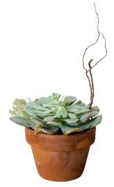 La succulente... (PHOTO MARCO CAMPANOZZI, LA PRESSE) - image 4.0