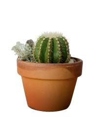 Le cactus... (PHOTO MARCO CAMPANOZZI, LA PRESSE) - image 5.0