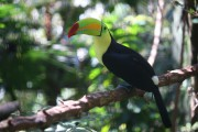 Le toucan est l'un des symboles nationaux du... (Photo Sylvain Sarrazin, La Presse) - image 4.0