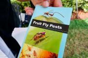 Les autorités américaines ne savent pas comment l'insecte... (AFP, Kerry Sheridan) - image 1.0
