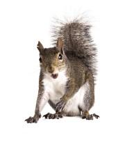 Les écureuils peuvent avoir accès à la toiture... (photoThinkstock) - image 1.0