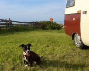 La chienne Dina a fait partie intégrante d'un... (Photo fournie par Louise Dugas) - image 1.0
