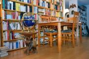Le propriétaire collectionne les globes terrestres, les aigles,... (Le Soleil, Jean-Marie Villeneuve) - image 3.0