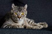 « Dernièrement, j'ai reçu plus de 150 photos de chats... (Photo courtoisie) - image 3.0