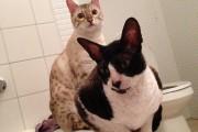 « Dernièrement, j'ai reçu plus de 150 photos de chats... (Photo courtoisie) - image 4.0