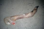 Quelques pattes de chevreuils se cachent à l'occasion... (Courtoisie) - image 1.0