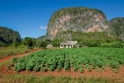 De nombreux champs de tabac, où l'on utilise... (PHOTO THINKSTOCK) - image 1.0
