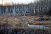 Les terres humides du secteur de la centrale... (Photo Le Quotidien, Laura Lévesque) - image 1.0