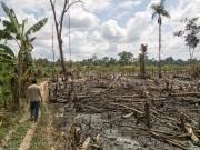 Au Pérou, des champs et des forêts sont... (Photo fournie) - image 2.0