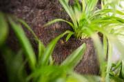 Il existe une panoplie de jardins verticaux à... (PHOTO OLIVIER PONTBRIAND, ARCHIVES LA PRESSE) - image 1.0