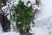 Le poteau vire au vert à la Saint-Patrick.... (Photo fournie par Michèle Renaut) - image 3.1