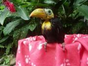 Il est possible d'admirer plusieurs animaux du Costa... (PHOTO FOURNIE PAR LE JAGUAR RESCUE CENTER) - image 2.0