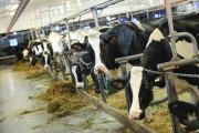 Une rénovation majeure de la ferme en 2009... (Photo Le Quotidien, Gimmy Desbiens) - image 4.0