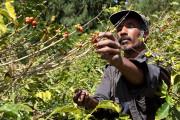 Plus de 80 % du café mondial est... (123RF/Darrin Henry) - image 2.0