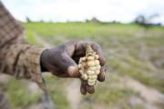 Les récoltes s'annoncent catastrophiques au Zimbabwe, où 10%... (PHOTO PHILIMON BULAWAYO, ARCHIVES REUTERS) - image 5.0