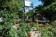 Le Jardin des Maraîchers urbains est une initiative... (Éco-Kartier) - image 1.1