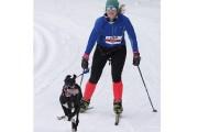 Les skieurs les plus rapides, avec un chien... (Alain Dion, La Voix de l'Est) - image 1.0