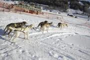 Des balades en traîneau à chiens étaient organisées.... (Photo Le Quotidien, Mariane L. St-Gelais) - image 3.1