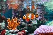 Parmi les poissons d'eau salée les plus faciles... (123RF/lcalek) - image 1.0