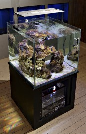 Parmi les nouveautés, les aquariums de forme cubique... (Le Soleil, Patrice Laroche) - image 2.0