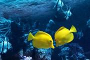 Ce couple de chirurgiens jaunes amène assurément grâce... (123RF/Hannu Viitanen) - image 4.0