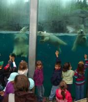 Le Zoo sauvage de Saint-Félicien a connu une hausse de... (Archives Le Quotidien) - image 2.0