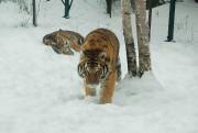 Le Zoo sauvage de Saint-Félicien a connu une hausse de... (Archives Le Quotidien) - image 3.0