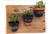 Marie-Ève Arbour adore les plantes et dans sa... (Fournie par Marie-Ève Arbour) - image 2.0