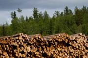 Le volume de bois qui peut être récolté... (PHOTO BEN NELMS, ARCHIVES BLOOMBERG) - image 2.0