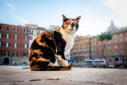 Un chat de la Colonia Felina Torre Argentina... (PHOTO THINKSTOCK) - image 4.0
