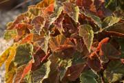 Depuis 10 ans maintenant, les jardiniers québécois sont choyés par une gamme de... - image 5.0