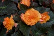 Depuis 10 ans maintenant, les jardiniers québécois sont choyés par une gamme de... - image 7.0