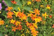 Depuis 10 ans maintenant, les jardiniers québécois sont choyés par une gamme de... - image 11.0