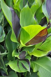 Les plantes au feuillage nettement bicolore sont plus... (Photo Claude Vallée) - image 11.0