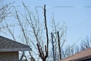 La branche que l'émondeur coupait est tombée sur... (PHOTO PATRICK SANFAÇON, LA PRESSE) - image 1.0