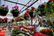 Il est possible d'acheter des jardinières en pépinière... (PHOTO ALAIN ROBERGE, LA PRESSE) - image 2.0