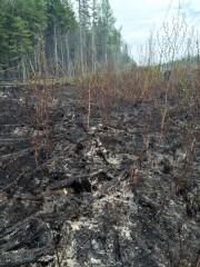 En raison des températures chaudes et du vent,... (Service de protection contre l'incendie de Québec) - image 1.1
