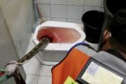 Un Thaïlandais se reposait après une rencontre sanglante... (AP, BBTV CH7) - image 1.0
