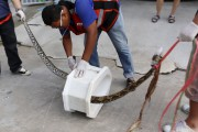 Les secouristes ont démantelé la toilette à la... (AP, BBTV CH7) - image 1.1