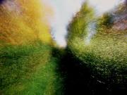 Image tirée de brouillard #14, Alexandre Larose, présenté... - image 3.0