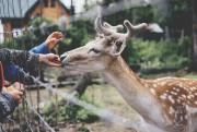 Le Miller Zoo... (Stéphanie Allard) - image 6.0