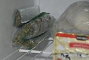 Les policiers ont découvert 633 plants de marijuana... (Photo courtoisie, Sécurité publique de Saguenay) - image 3.0