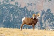 Les parcs nationaux américains fêtent cette... (PHOTO ALAIN ROBERGE, LA PRESSE) - image 4.0