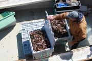 Un débarquement de homards à Saint-Godefroi... (Collaboration spéciale Gilles Gagné) - image 1.0