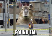 Le coeur du centre-ville d'Ottawa est défiguré depuis mercredi matin.À 10h40,... - image 5.1