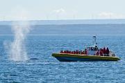 Une baleine souffle tout pres d'un zodiac de... (La Presse, David Boily) - image 2.1