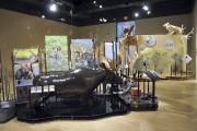 L'exposition Panache: caribous et autres cervidés est présentée... (Photo Le Quotidien, Rocket Lavoie) - image 1.0