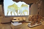 L'exposition Panache: caribous et autres cervidés est présentée... (Photo Le Quotidien, Rocket Lavoie) - image 1.1