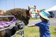 Le Festival de truite mouchetée est lancé (Olivier Croteau) - image 3.0